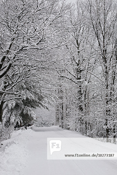 'A snow covered road lined with leafless trees in winter; Brome Lake  Quebec  Canada'