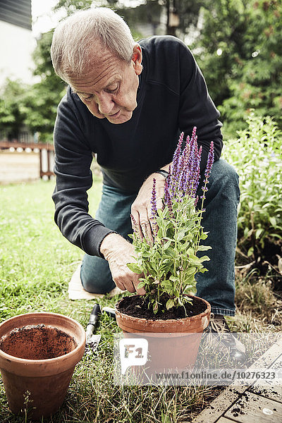 Senior Mann pflanzt Blumentopf auf dem Hof