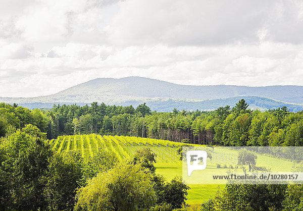Landschaftlich schön landschaftlich reizvoll Wolke Himmel Landschaft grün unterhalb
