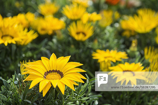 Flowers for sale in garden centre  Augsburg  Bavaria  Germany