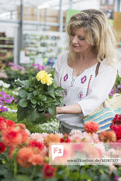 Mature woman shopping in garden centre  Augsburg  Bavaria  Germany