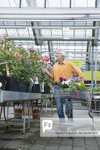 Mature man choosing plants in garden centre  Augsburg  Bavaria  Germany