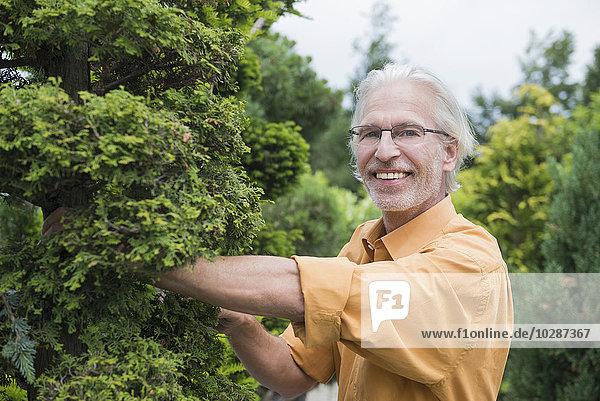 Mature man examining a hedge plant in plant nursery  Augsburg  Bavaria  Germany Mature man examining a hedge plant in plant nursery, Augsburg, Bavaria, Germany