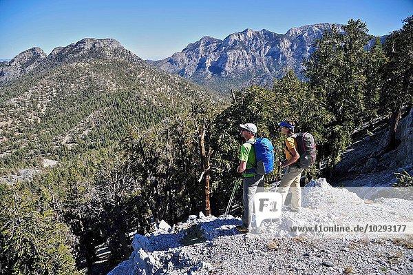 Couple hiking  Mount Charleston Wilderness trail  Nevada  USA