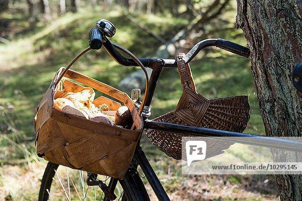 Fahrrad mit gesammelten Pilzen in Körben im Wald