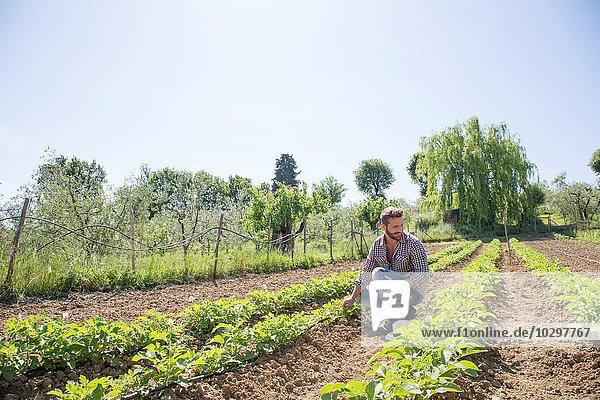 Junger Mann hockt im Feld und schaut auf Tomatenpflanzen