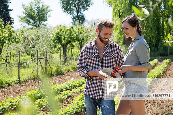 Paar im Gemüsegarten mit Tomaten im Hut lächelnd Paar im Gemüsegarten mit Tomaten im Hut lächelnd