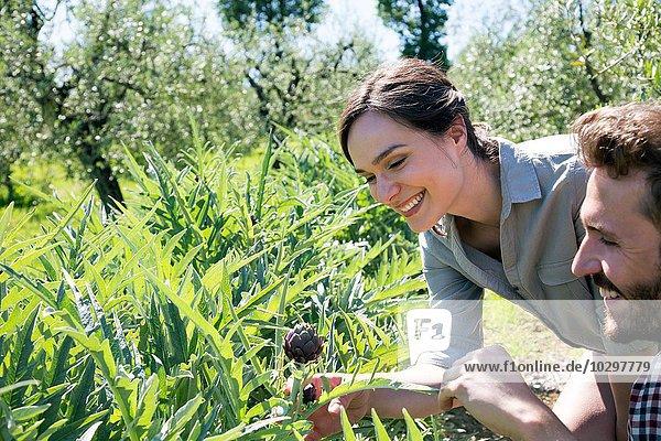 Junges Paar sieht lila Artischockenpflanze lächelnd an Junges Paar sieht lila Artischockenpflanze lächelnd an