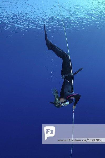 Freitauchen  auch Apnoetauchen  Rotes Meer  Ägypten  Afrika