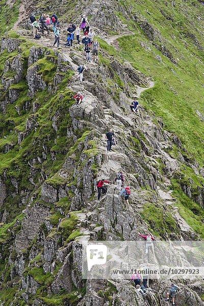 Menschen auf dem Striding Edge  Helvellyn  Lake District  Cumbria  England  Großbritannien  Europa