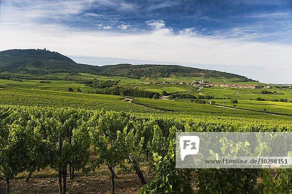 Dorf in den Weinbergen  hinten Saint-Hippolyte und die Hohkönigsburg  Elsass  Frankreich  Europa
