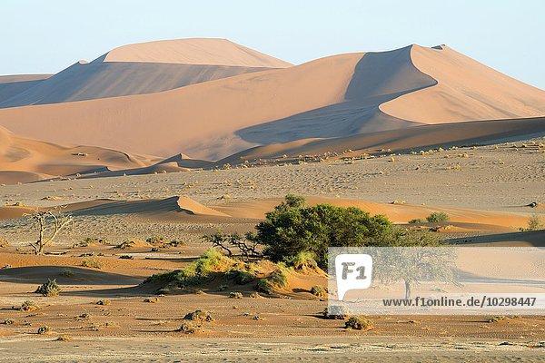 Sanddünen in der Namib-Wüste  Namib-Naukluft-Park  Sossusvlei  Namibia  Afrika