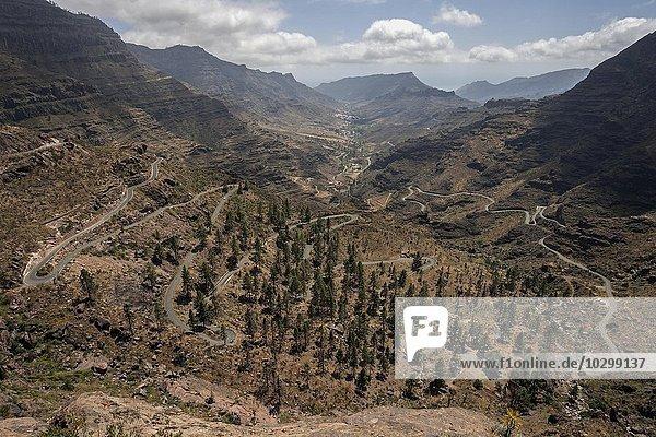 Ausblick auf eine Serpentinenstraße und ein Tal bei Las Casas de Venegueras  Gran Canaria  Kanarische Inseln  Spanien  Europa