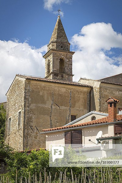 Venezianische Kirche Crkva Bla?ene Djevice Marije dei Servi  vorne Weinstöcke  Motovun  Istrien  Kroatien  Europa