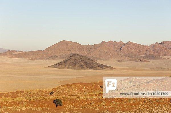 Mit Buschmanngras (Stipagrostis sp.) bewachsene Sanddünen  trockene Wüsteneben und isolierte Bergrücken am Rande der Namib-Wüste  Kameldornbäume (Acacia erioloba)  NamibRand-Naturreservat  Namibia  Afrika