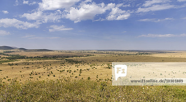Stretch landscape in the Masai Mara at the Sand River with a view of the northern savannah of the Serengeti  Llamai Wedge  Maasai Mara National Reserve  Narok County  Kenya  Africa