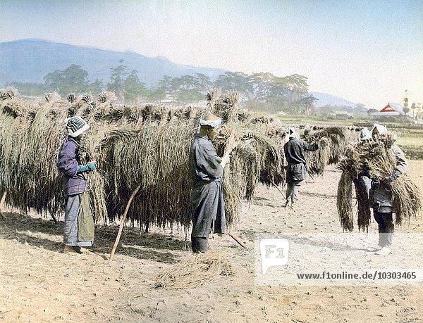 Bauern auf dem Feld  Japan  Asien
