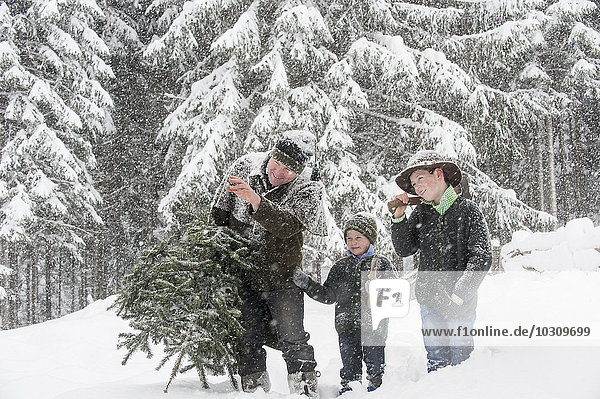 Austria  Altenmarkt-Zauchensee  father with two sons carrying Christmas tree in winter landscape