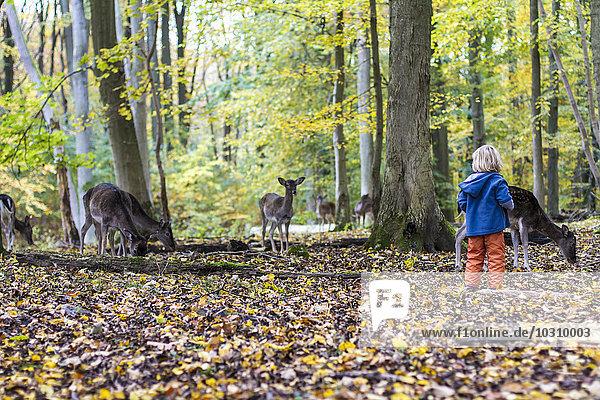 Little girl watching roe deer in a game preserve