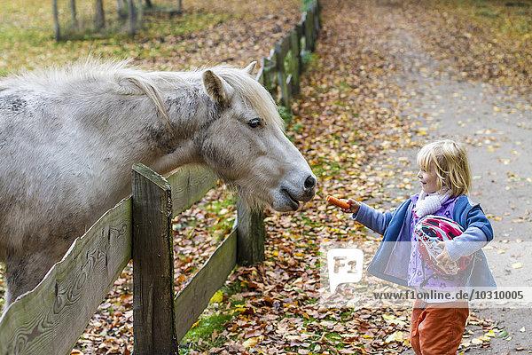 Little girl feeding horse