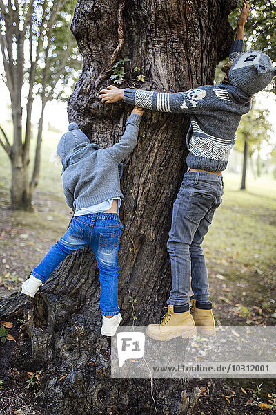 Back view of two little boys climbing on a tree trunk