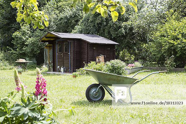 Schubkarre mit Pflanze im Garten