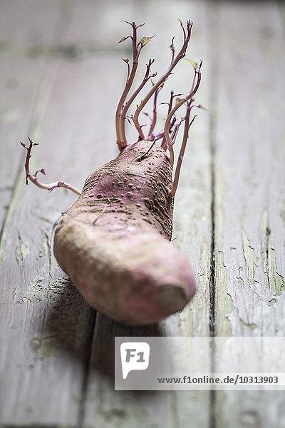 Gesprossene Süßkartoffel  Ipomoea batatas  auf Holz