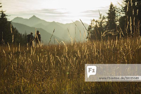 Österreich  Tirol  Tannheimer Tal  hohes Gras im Sonnenlicht auf Alpweide