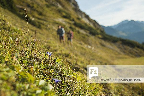 Österreich  Tirol  Tannheimer Tal  Blumen wachsen auf Almen