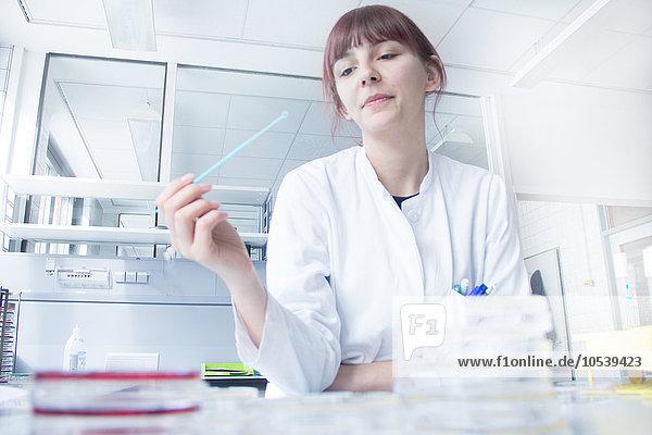 Wissenschaftler Teststreifen im Labor