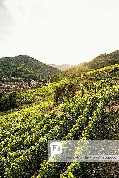 Dorf mit Burgruine in den Weinbergen bei Sonnenuntergang  Ribeauvillé  Département Haut-Rhin  Elsass  Frankreich  Europa