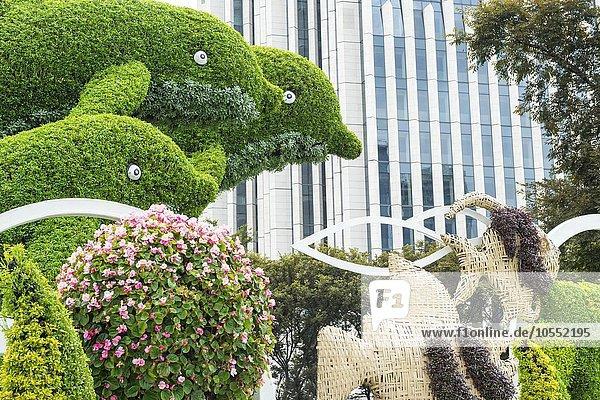 Buchsbaum  geschnitten in der Form von Delfinen  Shanghai  China  Asien