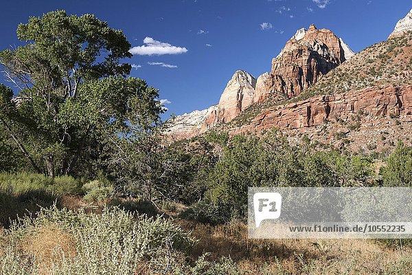 Tal des North Fork Virgin River und Sandsteinfelsen  Zion Nationalpark  Utah  USA  Nordamerika
