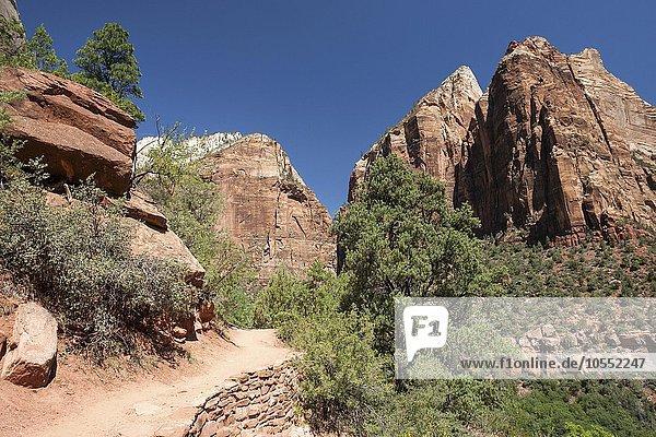 Emerald Pools Trail  Zion Nationalpark  Utah  USA  Nordamerika