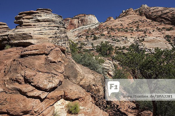 Gesteinsformationen aus Sandstein  Canyon Overlook Trail  Zion Nationalpark  Utah  USA  Nordamerika