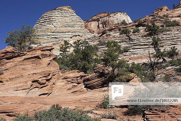 Gesteinsformationen aus Sandstein am Canyon Overlook Trail  Zion Nationalpark  Utah  USA  Nordamerika