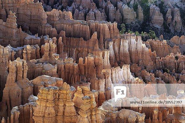 Ausblick auf farbige Gesteinsformationen  Hoodoos  Morgenlicht  Bryce Canyon Nationalpark  Utah  USA  Nordamerika