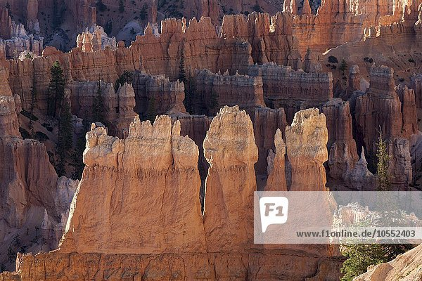 Ausblick auf farbige Gesteinsformationen im Bryce Amphitheater  Hoodoos  Morgenlicht  Bryce Canyon Nationalpark  Utah  USA  Nordamerika