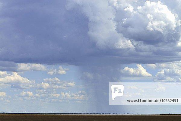 Regenwolken über Etosha Pfanne  Etosha Nationalpark  Namibia  Afrika