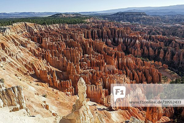 Ausblick vom Inspiration Point in das Bryce Amphitheater mit farbigen Gesteinsformationen  Hoodoos  Morgenlicht  Bryce Canyon Nationalpark  Utah  USA  Nordamerika