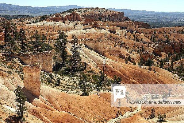 Ausblick vom Queens Garden Trail auf farbige Gesteinsformationen  Hoodoos  Bryce-Canyon-Nationalpark  Utah  USA  Nordamerika