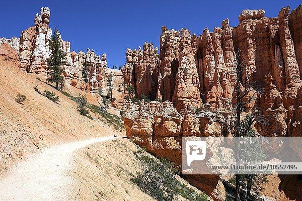Farbige Gesteinsformationen  Hoodoos  Queens Garden Trail  Bryce-Canyon-Nationalpark  Utah  USA  Nordamerika