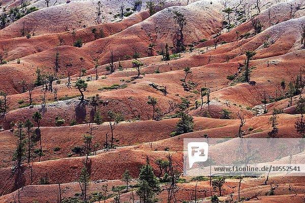 Ausblick vom Queens Garden Trail auf farbige Gesteinsformationen  Bryce-Canyon-Nationalpark  Utah  USA  Nordamerika