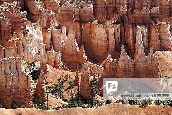 Ausblick am Sunset Point auf farbige Gesteinsformationen  Hoodoos  Bryce-Canyon-Nationalpark  Utah  USA  Nordamerika