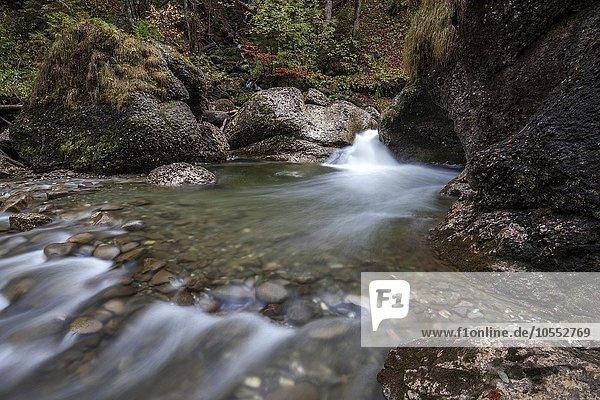 Ostertalbach im Ostertaltobel mit kleinem Wasserfall  Herbststimmung  Gunzesried-Säge  Allgäu  Bayern  Deutschland  Europa