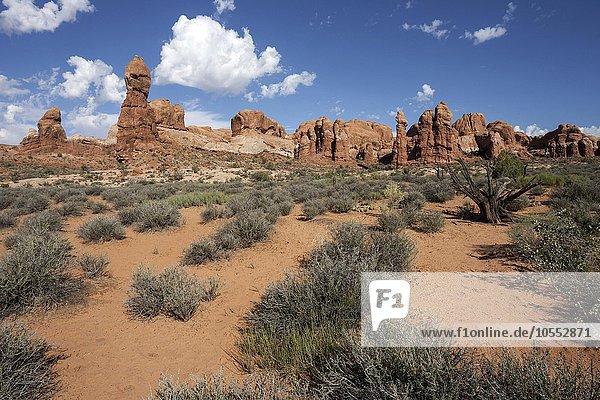 Rock Pinnacles  Arches National Park  Utah  USA  Nordamerika
