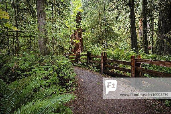 Cathedral Grove  Pacific Rim Nationalpark  Vancouver Island  British Columbia  Kanada  Nordamerika
