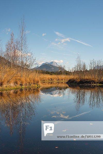 Moorsee  Libellenteich im Herbst  Pürgschachen Moor  Ardning  Steiermark  Österreich  Europa