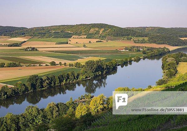 Morgenstimming am Main  Weinberg Kalbenstein bei Gambach  hinten der Mäusberg  Gemeinde Karlstadt  Unterfranken  Franken  Bayern  Deutschland  Europa