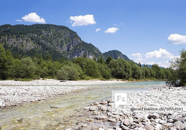 Isar vor Sylvensteinsee  Isarwinkel  Oberbayern  Bayern  Deutschland  Europa